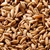 800173 - Briess Blonde RoastOat Malt - per oz.